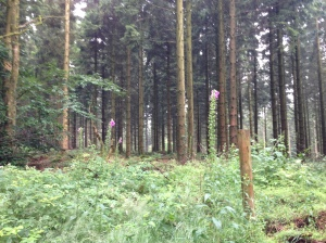 Wentwood 1 - trees